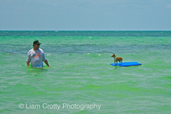 Funniest photo from Key West - man pulling dog on surf board